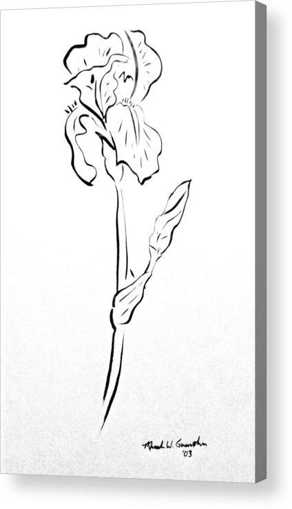 Abstract Acrylic Print featuring the drawing Iris II by Micah Guenther