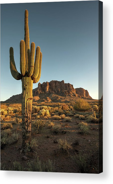 Saguaro Cactus Acrylic Print featuring the photograph Saguaro Cactus And Superstition by Kjschoen