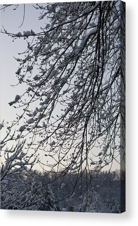 Snow Acrylic Print featuring the photograph Snow Covered Branches by Teresa Mucha