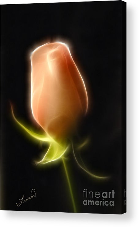 Rose Acrylic Print featuring the painting The Rose by Francine Dufour Jones