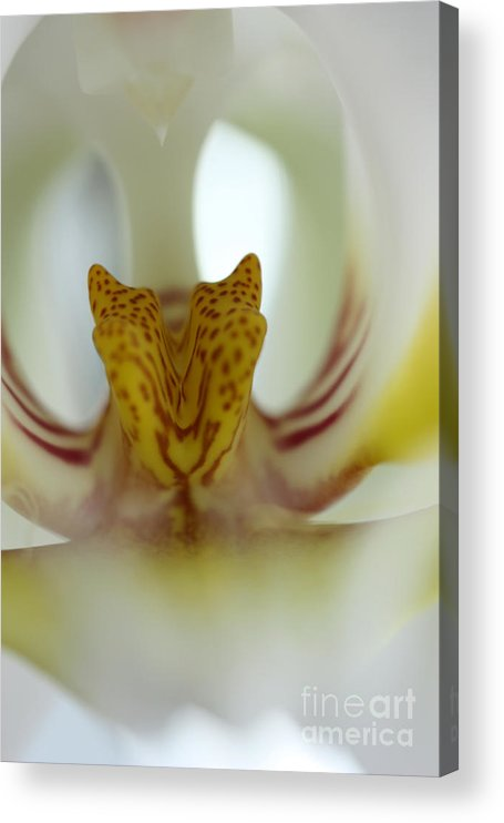 Tiger Orchid Acrylic Print featuring the photograph Tiger Orchid by David Bearden