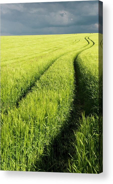 Scenics Acrylic Print featuring the photograph Tire Tracks In Grain Field by Thomas Winz