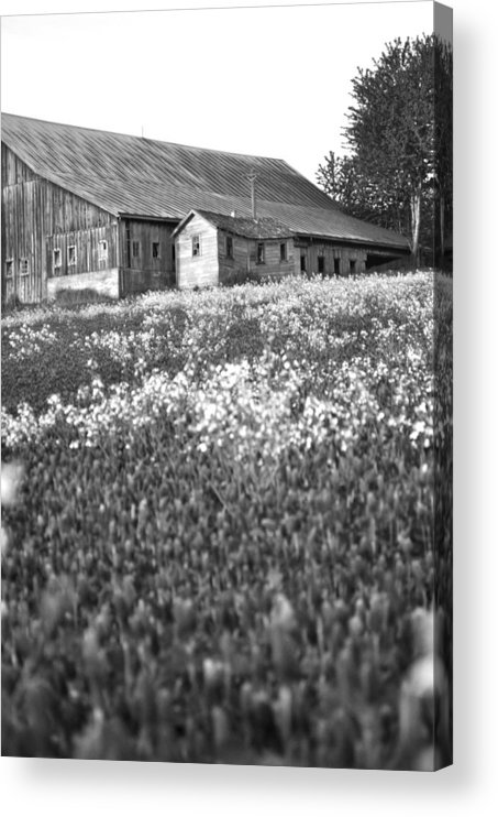 Old Barn Acrylic Print featuring the photograph Turn Of The Century Elegance by Everett Bowers