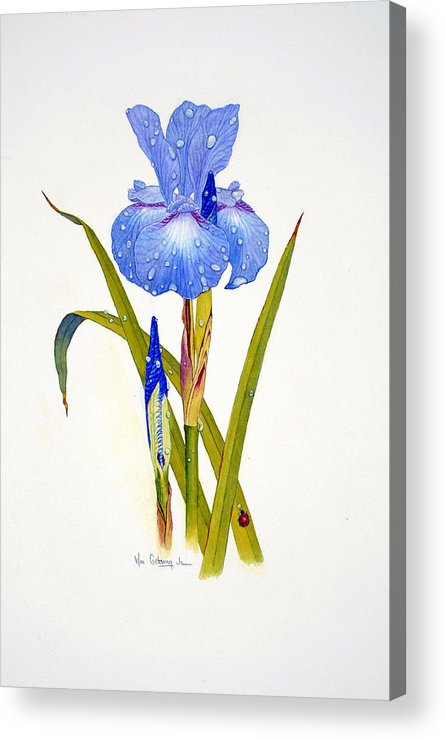 Flowers Acrylic Print featuring the painting Japanese Iris by Bill Gehring
