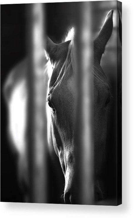 Horse Acrylic Print featuring the photograph A Champ In Retirement by Greg Sharpe