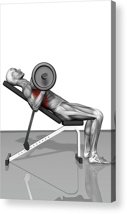 Vertical Acrylic Print featuring the photograph Bench Press Incline (part 2 Of 2) by MedicalRF.com
