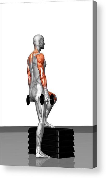 Vertical Acrylic Print featuring the photograph Dumbbell Step-up Exercise (part 2 Of 2) by MedicalRF.com