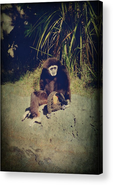 Primates Acrylic Print featuring the photograph I Need A Hug by Laurie Search