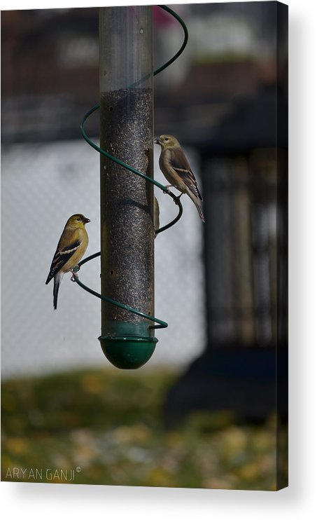 Birds Acrylic Print featuring the photograph Perfect Day by Aryan Ganji