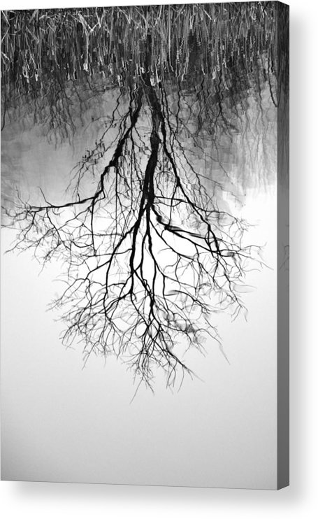 Tree Acrylic Print featuring the photograph Reflection by Lisa Kane