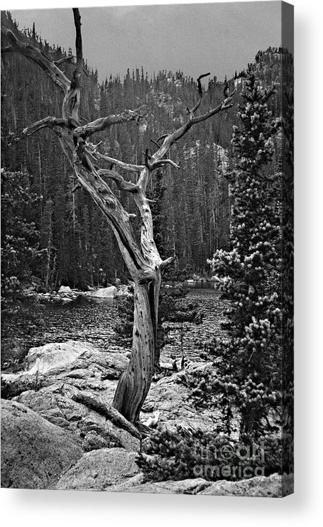 Tree Acrylic Print featuring the photograph Twisted Tree by Pete Hellmann