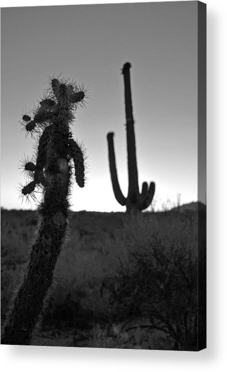 Cactus Acrylic Print featuring the photograph Untitled 5 by Everett Bowers
