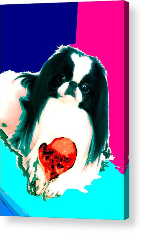 A Japanese Chin And His Toy Acrylic Print featuring the digital art A Japanese Chin and His Toy by Kathleen Sepulveda