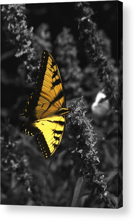 Black Acrylic Print featuring the photograph Color My World by Mandy Wiltse