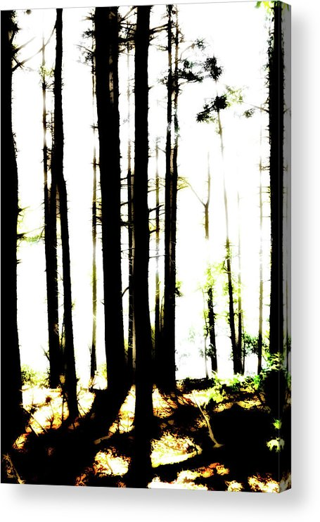 Bright Acrylic Print featuring the photograph Dawn in the woods by Corey O'Hara