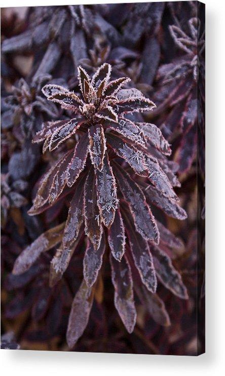 Christmas Acrylic Print featuring the photograph Frozen Christmas by Douglas Barnett