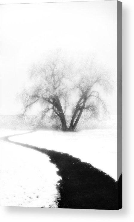 Tree Acrylic Print featuring the photograph Getting There by Marilyn Hunt