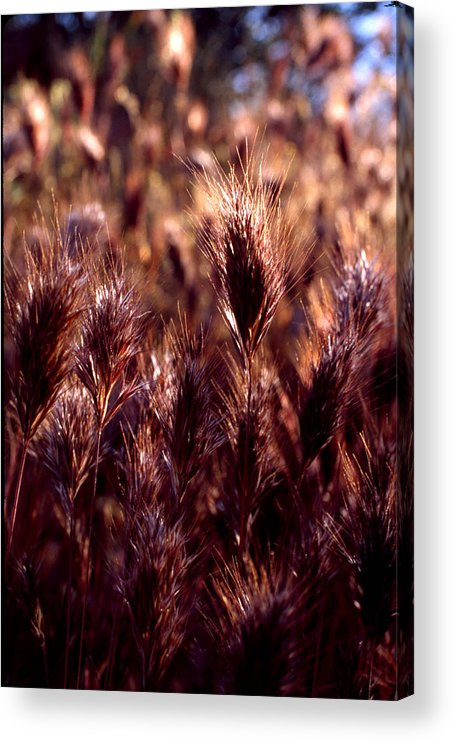 Nature Acrylic Print featuring the photograph Gideon by Randy Oberg