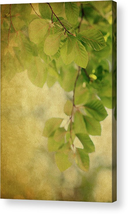 Leaves Acrylic Print featuring the photograph Golden by Rebecca Cozart
