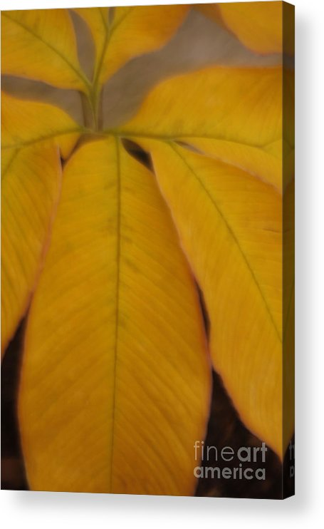 Leave Acrylic Print featuring the photograph Golden Umbrella by Katherine Morgan