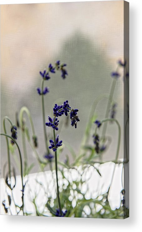 Alternative Acrylic Print featuring the photograph Growing Lavender Vase by Adrian Bud