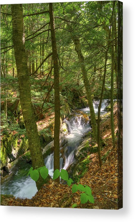 Honey Hollow Falls Acrylic Print featuring the photograph Honey Hollow by Mandy Wiltse