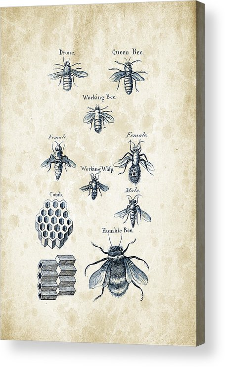 Bee Acrylic Print featuring the digital art Insects - 1792 - 14 by Aged Pixel