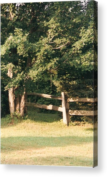 Trees Acrylic Print featuring the photograph My Quiet Corner - Photograph by Jackie Mueller-Jones