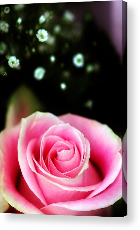 Pretty Acrylic Print featuring the photograph Pretty In Pink by Mandy Wiltse