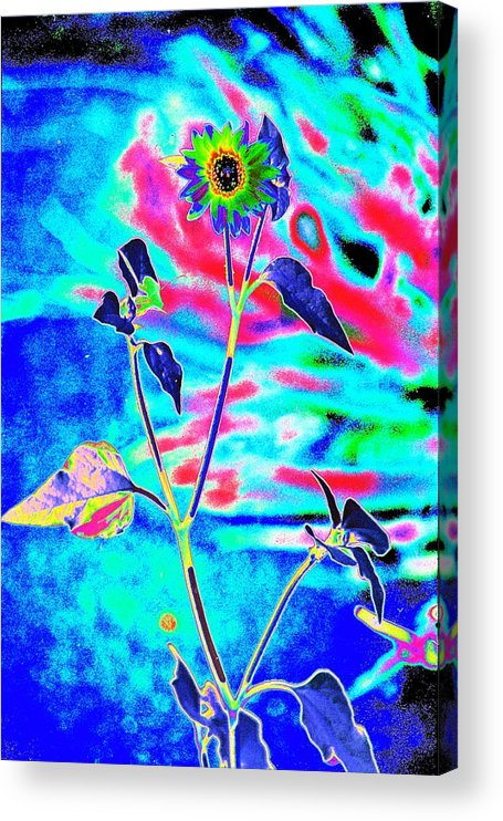 Psychedelicized Daisy Acrylic Print featuring the photograph Psycho Daisy by Richard Henne