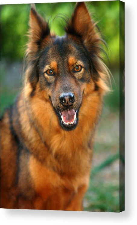 Smile Acrylic Print featuring the photograph Smile by Mandy Wiltse