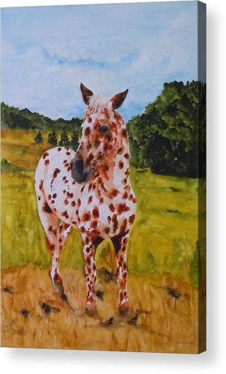 Horse Acrylic Print featuring the painting Spotted in Hawaii by Jean Blackmer