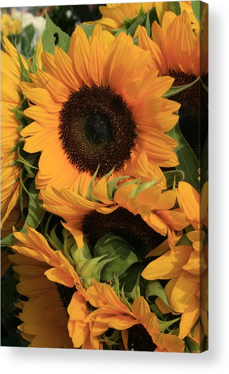 Flowers Acrylic Print featuring the photograph Suns and Brothers by Alan Rutherford