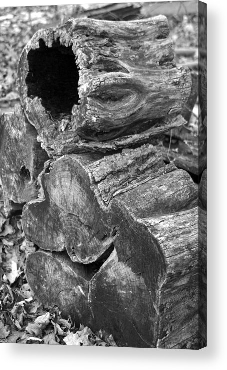 Acrylic Print featuring the photograph ThreeLogs by Curtis J Neeley Jr