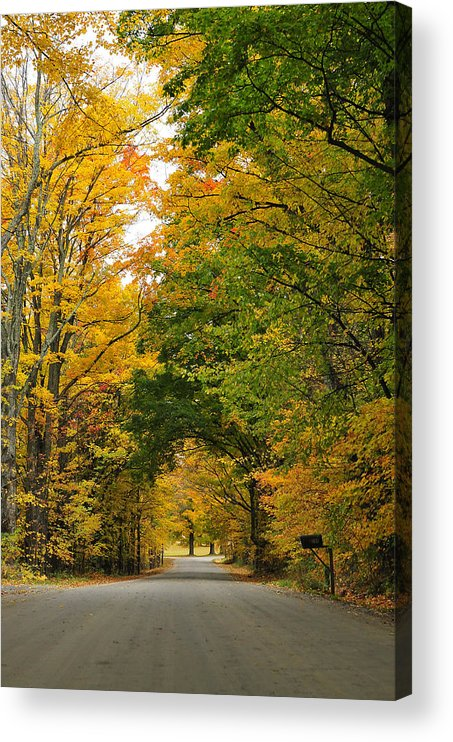 Vermont Acrylic Print featuring the photograph Vermont Foliage by Mandy Wiltse