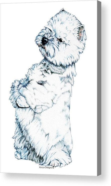 West Highland White Terrier Acrylic Print featuring the drawing West Highland White Terrier, Westie by Kathleen Sepulveda