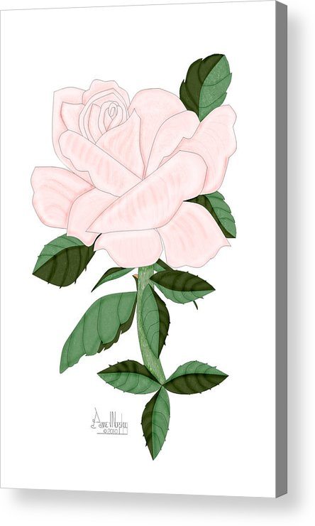 Pink Rose Acrylic Print featuring the painting Winter Blush Rose by Anne Norskog