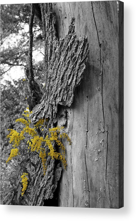 Bark Acrylic Print featuring the photograph Yellow Tufts by Dylan Punke