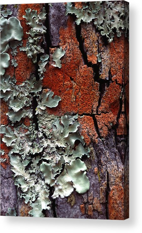 Built Structure Acrylic Print featuring the photograph Lichen On Tree Bark by John Foxx