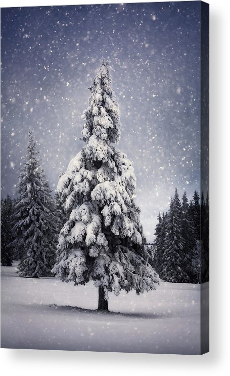 Scenics Acrylic Print featuring the photograph Winter Tree by Borchee