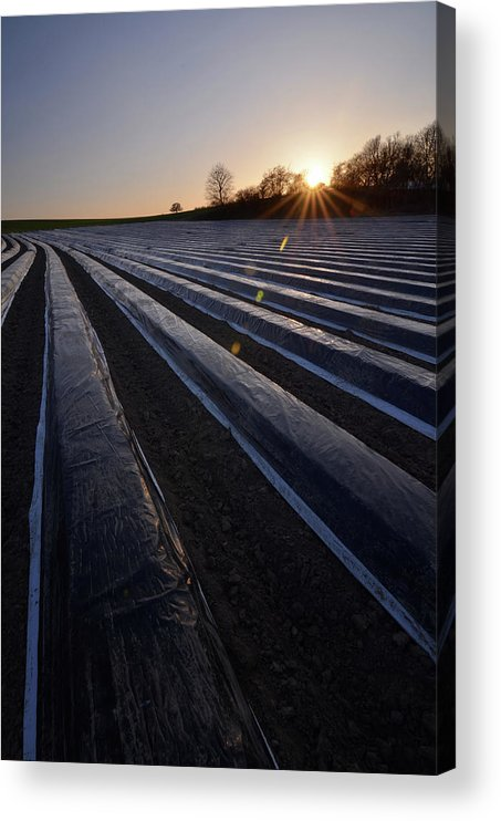 Tranquility Acrylic Print featuring the photograph Asparagus Field by Andy Brandl