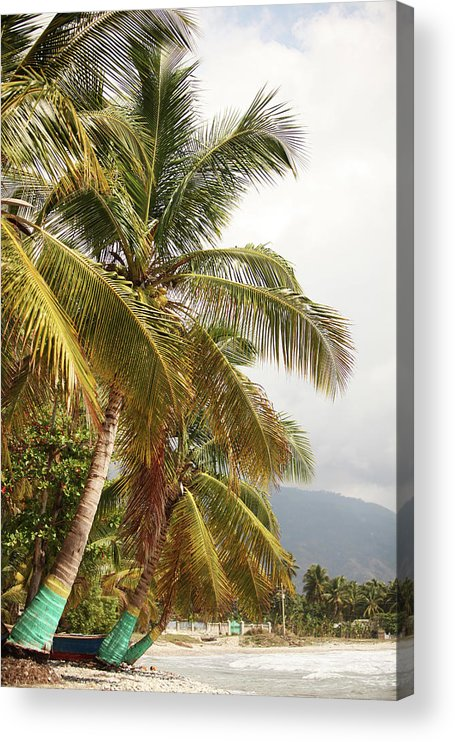 Tropical Tree Acrylic Print featuring the photograph Beach In Haiti by 1001nights