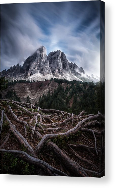 Roots Acrylic Print featuring the photograph Between Roots And Clouds by Andrea Zappia