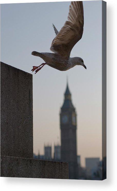 Clock Tower Acrylic Print featuring the photograph Bird Takeoff by Photograph © Jon Cartwright