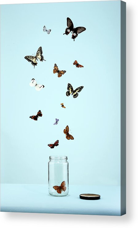 Animal Themes Acrylic Print featuring the photograph Butterflies Escaping From Jar by Martin Poole