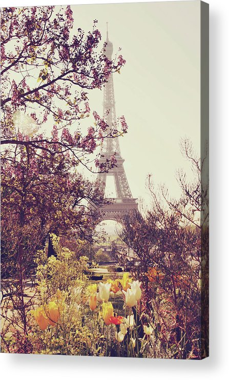 Treetop Acrylic Print featuring the photograph Eiffel Tower, Paris by Liz Rusby