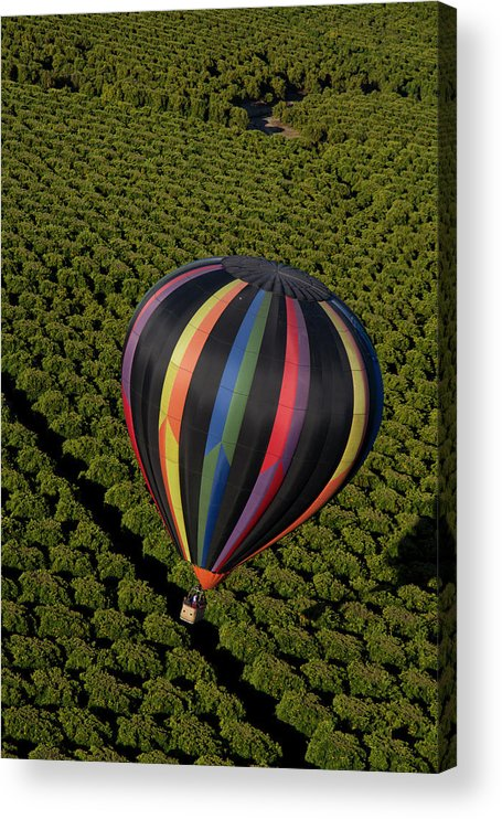 Tranquility Acrylic Print featuring the photograph Hot Air Balloon by Holly Harris