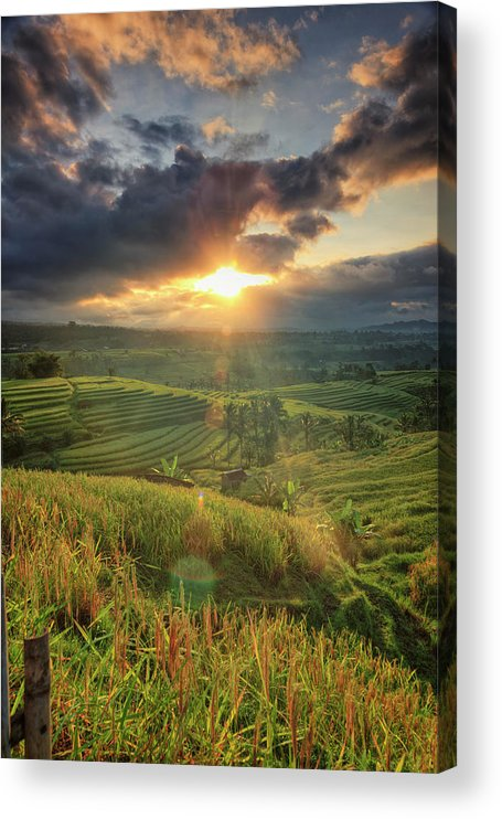 Tranquility Acrylic Print featuring the photograph Indonesia, Bali, Jatiluwih Rice Terraces by Michele Falzone
