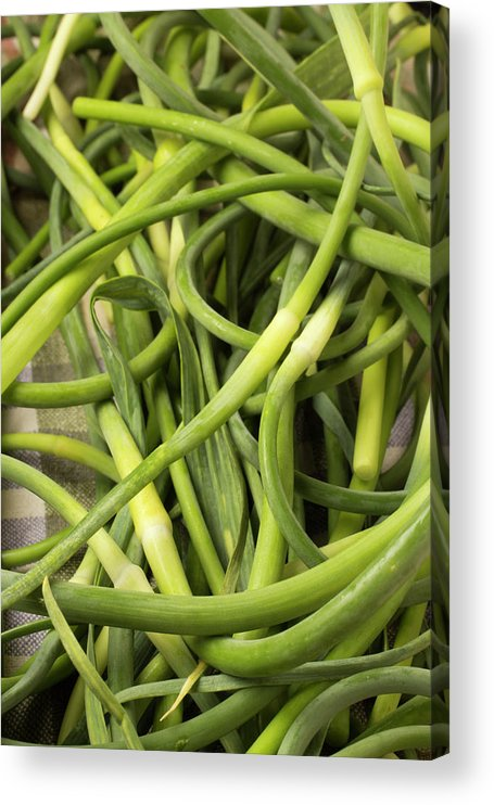 Season Acrylic Print featuring the photograph Raw Garlic Scapes by Brian Yarvin