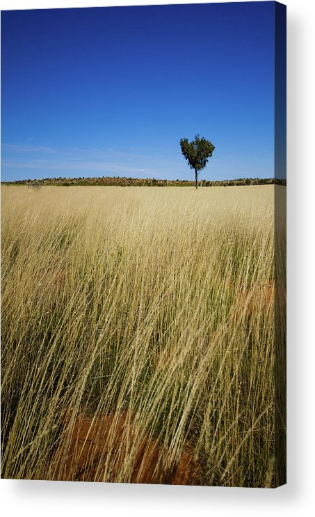Scenics Acrylic Print featuring the photograph Small Single Tree In Field by Universal Stopping Point Photography
